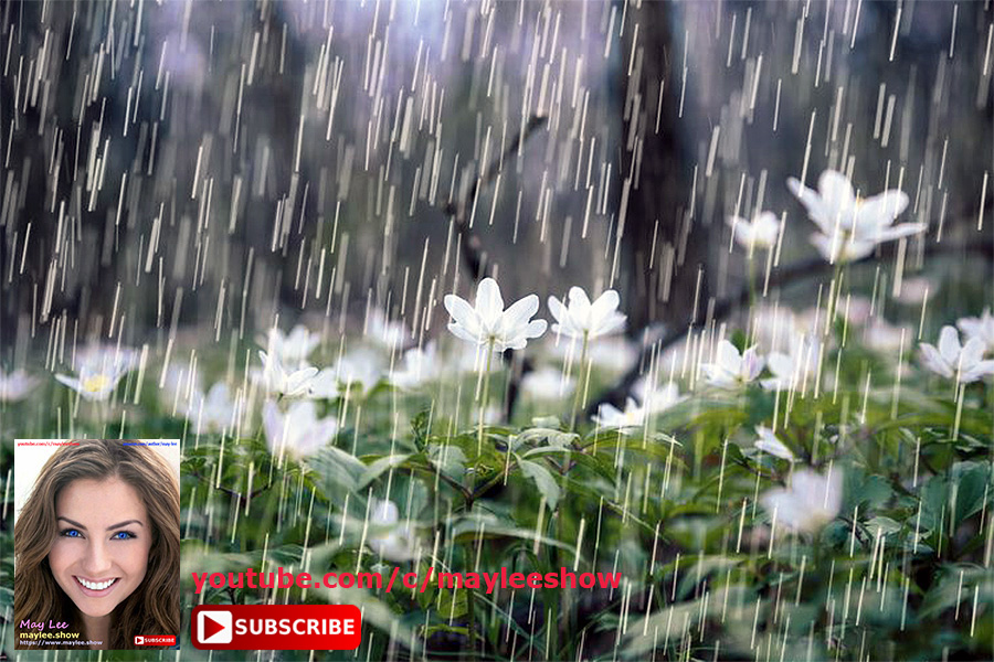 12 hours relaxing music attracting abundance rain sound scenery