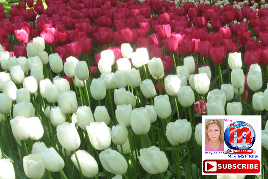 most beautiful white and red flowers